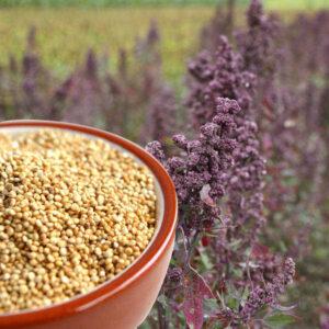 Quinoa de cultivo ecológico