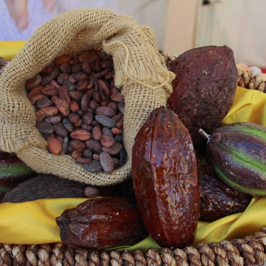 Recetas de cacao en grano