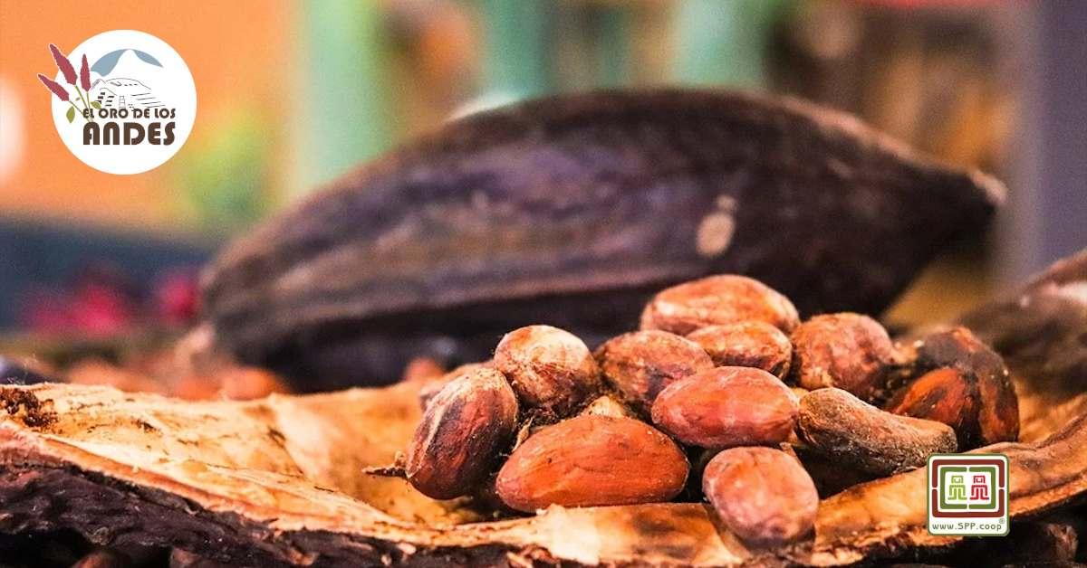 Cacao ecológico del perú