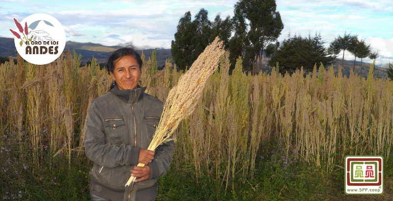 Agricultores de maca en el altiplano andino